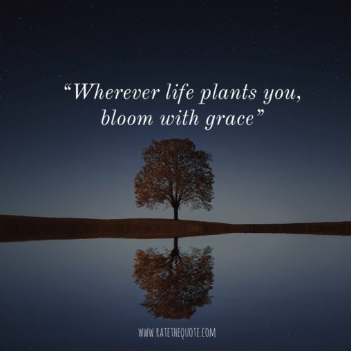 Wherever life plants you, bloom with grace